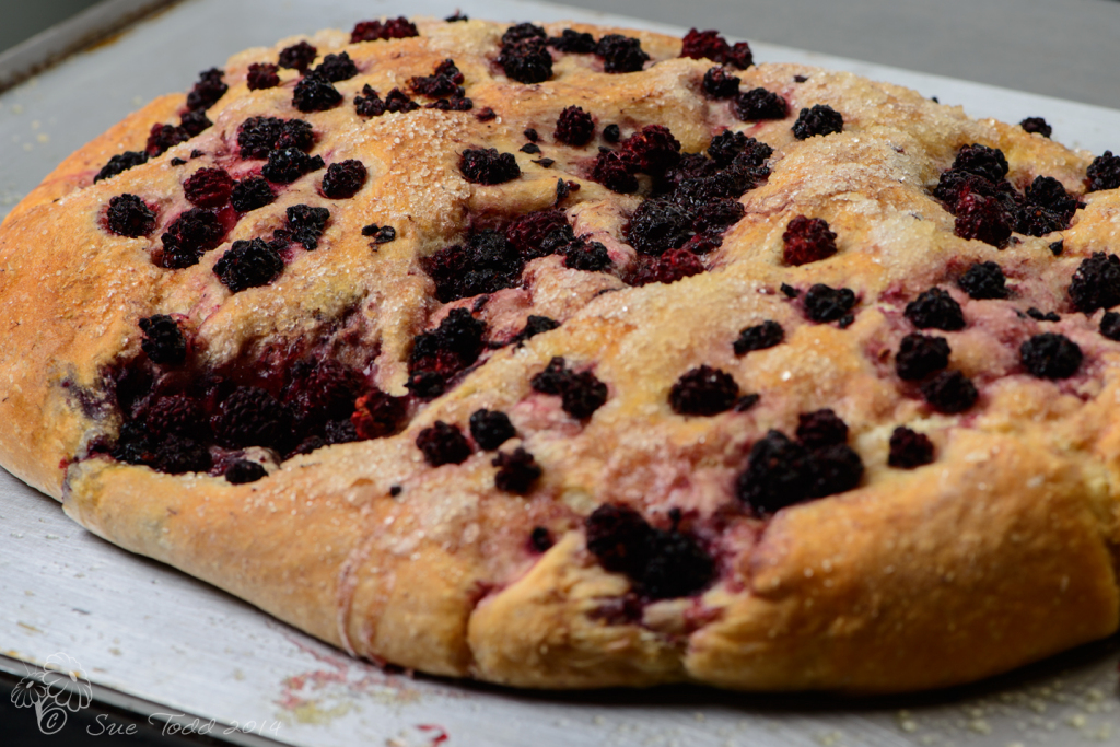 Blackberry Focaccia fresh from the oven © Sue Todd 2014
